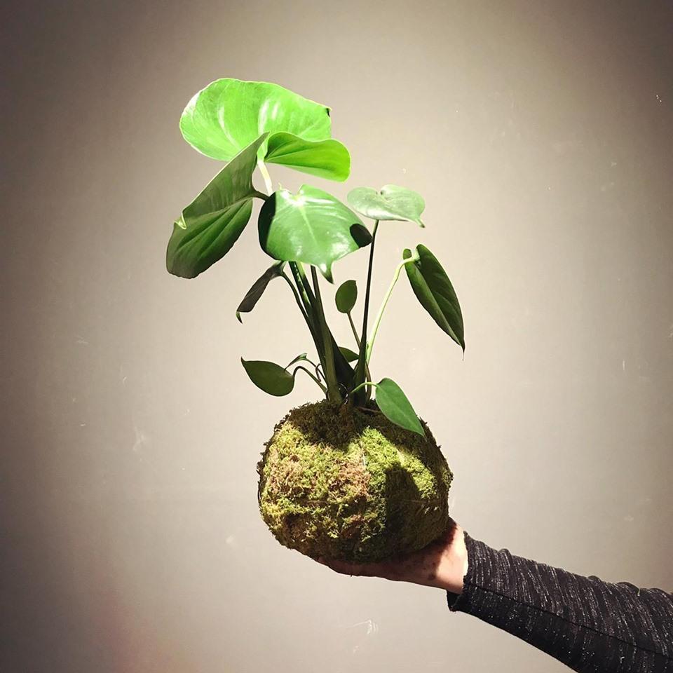 #cosmos #designerstück #hängepflanze #workshop #livingroom #sihlcity #handgemacht #lieblingsagentur #agenturamsee #compressoag